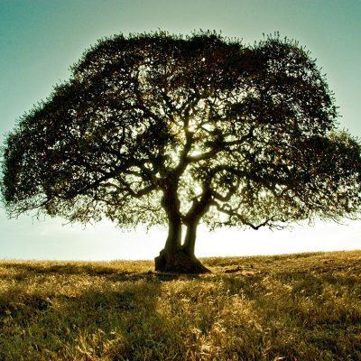世界三大銘木とは
